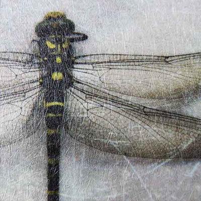 Slika Papergraphics Digimura-1.1